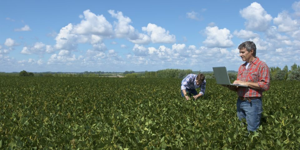 Weed Analysis Case Study for Soybeans