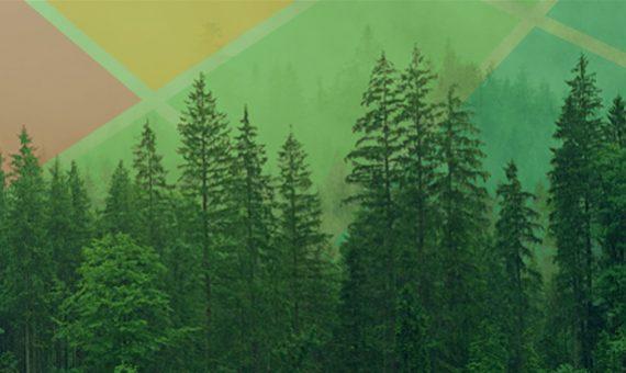 Timber Farming