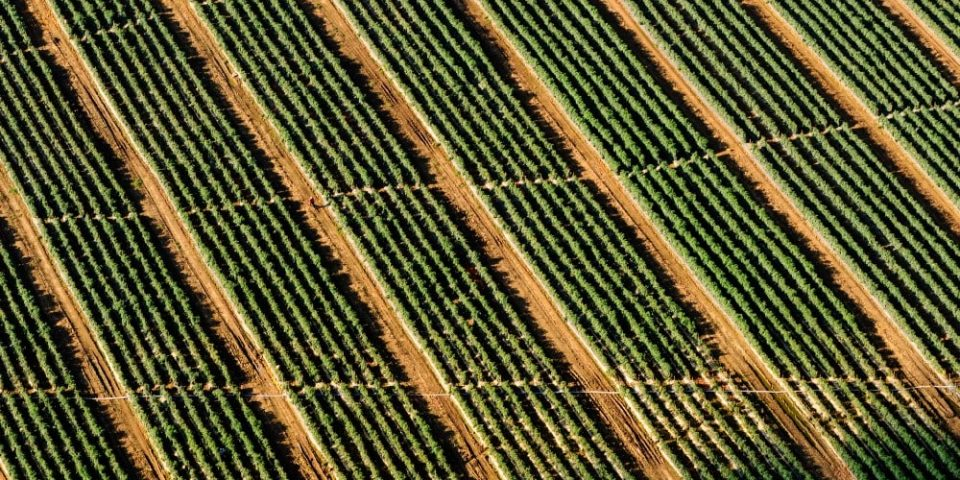 Fly Me to the Field: How Remote Sensing Helped a Grower Spot 26% Lower Crop Rates and Recoup Planting Costs