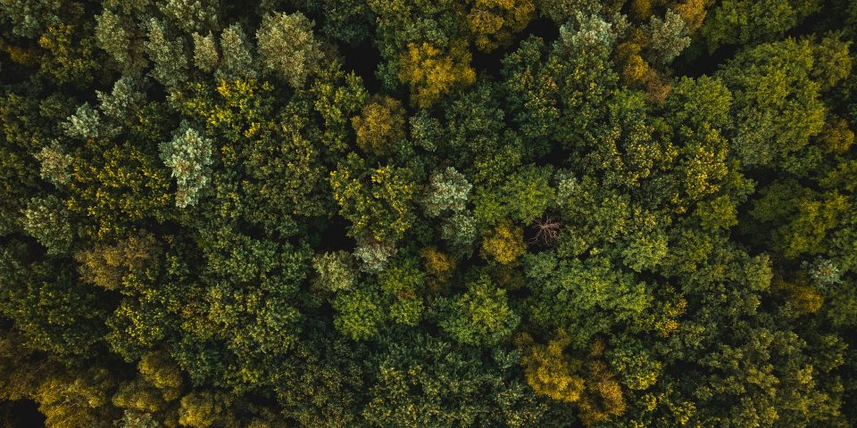3 Reasons why Forestry Companies Use Drones to Determine Tree Stocking Levels
